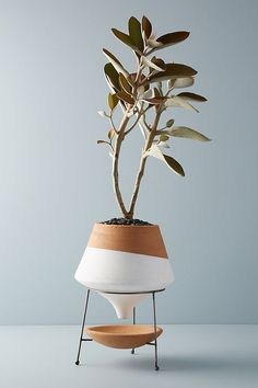 Made with glazed terracotta and metal Dipped Clay Pot + Stand by Anthropologie V. - Garden Style - Made with glazed terracotta and metal Dipped Clay Pot + Sta Decoration Plante, Decoration Table, Potted Plants, Indoor Plants, Pots For Plants, Hanging Plants, Indoor Herbs, Foliage Plants, Indoor Gardening