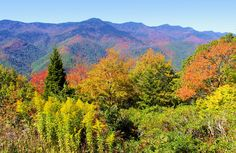 Get Asheville fall foliage forecast and timeline 2020 with plenty of updates, scenic drives, festivals, places to see in the Blue Ridge and Great Smoky Mountains of North Carolina. Asheville North Carolina, North Carolina Homes, Asheville Nc, Nc Mountains, Great Smoky Mountains, Blue Ridge Parkway Asheville, Country Charm, Southern Charm, Back Home