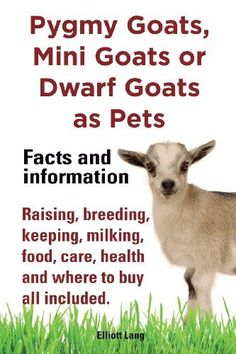 Pygmy Goats as Pets. Pygmy Goats, Mini Goats or Dwarf Goats: Facts and Information. Raising, Breeding, Keeping, Milking, Food, Care, Health and Where by Elliott Lang,http://www.amazon.com/dp/1909151505/ref=cm_sw_r_pi_dp_dlIRsb14P12RD5M3