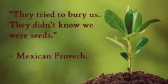 They tried to bury us. They didn't know we were seeds. What To Use, Bury, Inspirational Thoughts, Some Words, Wisdom Quotes, Proverbs, Seeds, Perspective, People