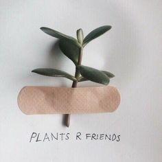 plants, grunge, and aesthetic image - Fotoideen - Kind Chandler Bing, Adam Parrish, Neville Longbottom, Plant Aesthetic, Aesthetic Green, Nature Aesthetic, Korean Aesthetic, Couple Aesthetic, Aesthetic Grunge
