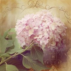 Companion image of painted lavender pink summer hydrangeas as they fade to the fall.  Grown in a giant pot on Audrey Jeanne's front porch and then captured forever in oil pastel & mixed media. #hydrangeas #pink #summer #autumn #fall #shabby #cottage #chic #worn #aged #vintage #wallart #homedecor #decorative #painting #artist #art #audreyjeanne From $22 for a print.