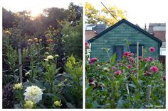 "Sarah Nixon is an ""accidental"" pioneer of the urban farming movement."