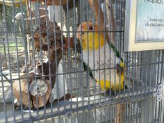 Tucked behind a baseball field on the VA campus in Westwood is a parrot sanctuary that doubles as a therapy site