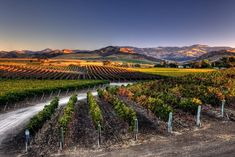 Santa Barbara wine country offers the wine-crazy traveler an authentic experience...
