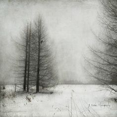 What You Seek You Will Find 相片擁有者 jamie heiden Abstract Photography, Artistic Photography, Fine Art Photography, Landscape Photography, Nature Photography, Photography Ideas, Winter Painting, Winter Art, Abstract Landscape