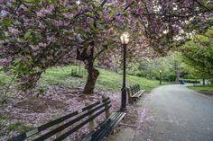 Cherry Hill Central Park New York