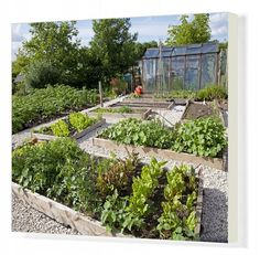 Inch Print - High quality print (other products available) - growing in raised beds on garden plot with greenhouse in background <br>Cheltenham UK<br>Mark Boulton - Image supplied by Ardea Wildlife Pets Environment - Photo Print made in the USA Vegetable Garden Planning, Backyard Vegetable Gardens, Vegetable Garden Design, Potager Garden, Herbs Garden, Indoor Garden, Succulents In Containers, Container Plants, Container Flowers