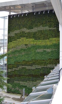 GIANT GREEN WALL AT THE VANCOUVER AIRPORT OVERVIEW