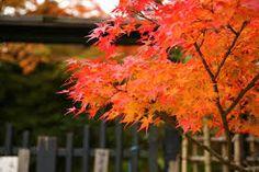 京都 紅葉 - Google 検索