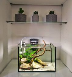 "223 Likes, 2 Comments - Saltwater / Freshwater Scaping (@reefscape) on Instagram: ""Little tank in a cabinet #reefscape #aquarium #aquascaping #aquascape #fish #planted #plantedtank…"""