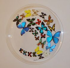 "24"" circle ,butterfly display,mounted butterflies,butterfly art, real butterfly art, butterflies in acrylic cases"