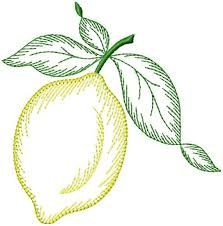 Image result for motifs citron