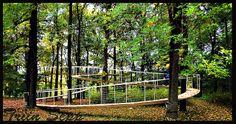 puente en espiral construido en un bosque