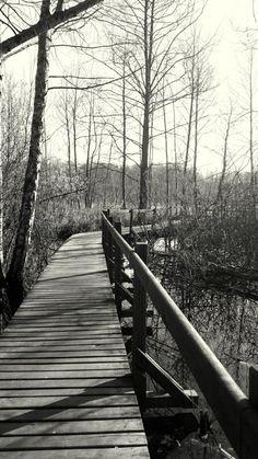 """Rezerwat przyrody """"Na torfach"""""""