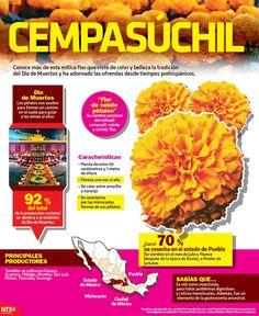 Hashtag #cempasúchil sur Twitter