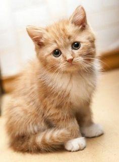 niedliche kleine Hauskatze