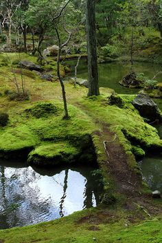 A moss-covered footpath leading over a pond