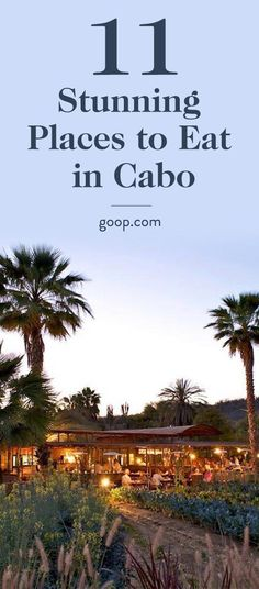 The 11 best restaurants to eat and drink in Cabo, Mexico