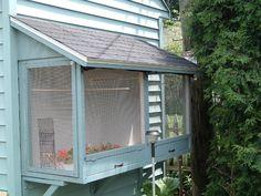 Outdoor birdcage onto chez chicken coop. full of finches...stop it. happening.