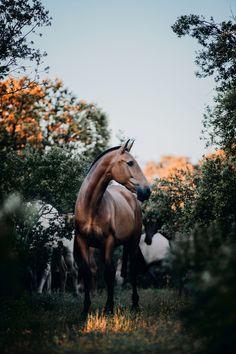 Cute Horses, Pretty Horses, Beautiful Horses, Animals Beautiful, Cute Animals, Equine Photography, Wildlife Photography, Animal Photography, Horse Pictures