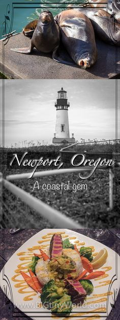 Newport Oregon is a fun beach town to visit with many nearby sights to see. Oregon Vacation, Oregon Road Trip, State Of Oregon, Oregon Travel, Oregon Coast, Pacific City Oregon, Portland Oregon, Road Trips, Lighthouses In Oregon