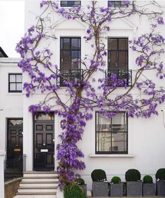 Love this Wisteria covered facade! Why is MY Wisteria NOT blooming? Exterior Design, Interior And Exterior, Purple Interior, Interior Ideas, My Dream Home, Outdoor Spaces, Outdoor Sheds, Beautiful Homes, Dream Homes