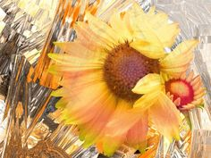 Blanket Flowers in the Wind - Floral Abstract