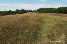 Pewley Down Nature Reserve in Guildford, an area of chalk grassland with far reaching views. Big Butterfly, Nature Reserve, Conservation, Places To Visit, Country Roads, Beautiful, Canning