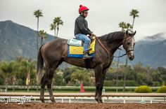 The most perfect pic of Arrogate ever