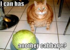 cute fat #cats