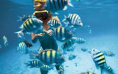 Lassen Sie sich von diesem unvergleichlichen Charme der Karibik anstecken und genießen Sie Ihre Karibikkreuzfahrt mit AIDA Cruises mit allen Sinnen. Lassen Sie sich entführen in das exotische Flair der Region und entspannen Sie bei karibischer Gelassenheit.