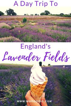 Visit England's beautiful lavender fields – WhodoIdo: Wander through the beautiful lavender fields and take in the fragrant lavender. Explore the lavender fields when in full bloom. Don't forget to try lavender ice cream! Europe Travel Tips, Travelling Europe, Travel Pics, Travel Ideas, City Breaks For Couples, Romantic Destinations, Travel Destinations, Weekend City Breaks, Visit England