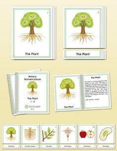 Botany Early Childhood Nomenclature | Montessori Research and Development - Montessori materials, teacher manuals and books