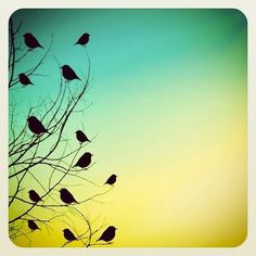 Streamzoo photo - Twitter tree