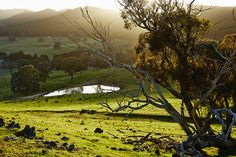Mandagery Creek sunrise by Ted O'Donnell for the Beerenberg Provenance Project.