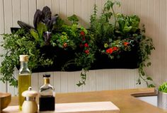 It's possible to take an indoor garden and revel in each of the benefits of beautiful plants. 1 thing you might discover useful for your indoor herb garden is having the ability to individually eliminate each herb so that you… Continue Reading → Indoor Vegetable Gardening, Container Gardening, Organic Gardening, Design Jardin, Garden Design, Diy Jardin, Plantas Indoor, Herb Wall, Indoor Herbs