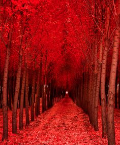 Luscious glorious red...I am totally thrilled that there is always light at the end of a tunnel. Well, what the above picture depicts is not really a tunnel, but it is a beautiful pathway that will guide you to achieve your very own dreams!!!! Red is a color with power and energy, the same that will propel you to continue moving forward...look inside of you and see the potential and the creative force ready to explode in splendor and beauty!!!! Be yourself and light up the world....