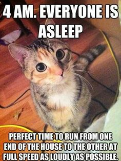 Funny cat quotes, funny cat pics, cute cat memes, cats funny sayings, Funny Animal Jokes, Funny Cat Memes, Cute Funny Animals, Funny Cute, Funniest Animals, Funny Shit, Funny Pics, Super Funny, Funny Humor