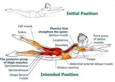 Office workers and anybody who tends to sit a lot will find these exercises very helpful in alleviating problems and symptoms associated with prolonged sitting. If you are diagnosed with a spinal or b (Fitness Workouts Flexibility) Fitness Workouts, Yoga Fitness, Health Fitness, Posture Exercises, Back Exercises, Stretches, Yoga Motivation, Thigh Muscles, Back Muscles