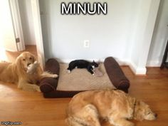 Funny Animal Pictures - View our collection of cute and funny pet videos and pics. New funny animal pictures and videos submitted daily. Funny Animal Photos, Funny Animal Videos, Funny Animals, Funny Pictures, Cute Animals, Pet Pictures, Animal Funnies, Party Animals, Picture Captions