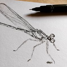 D is for Dragonfly 🐝 #art #drawing #sketch #blackink #fineliner #ink #dragonfly #insect