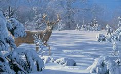 Whitetail deer buck in snow - Paintings by Scot Storm