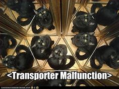 funny cat pictures - Classic LOLcat