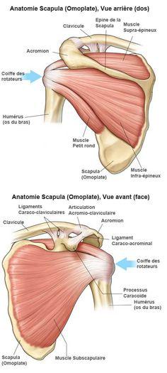 Coiffe des rotateurs et musculation