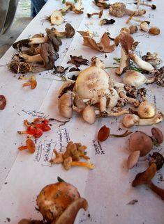 Mushroom specimens. Picking mushrooms in the wild.