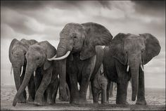 Elephant Five, Amboseli 2008 Nick Brandt
