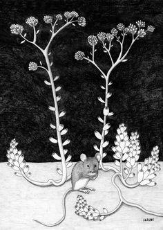 VEGETAVISIÓN VII Serie de dibujos a lápiz. El silencio de las plantas.  SAZUME www.sabinablasco.blogspot.com