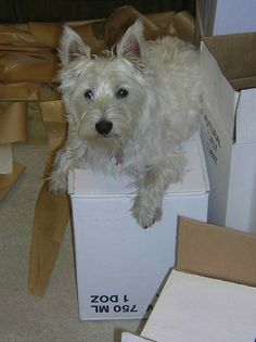 Olive, Princess of Wenwood, guarding a case of wine.