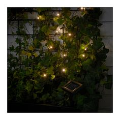 IKEA SOLARVET LED lighting chain with 24 lights Outdoor/solar-powered You can personalise the lighting chain to match the season or your style. Just add .